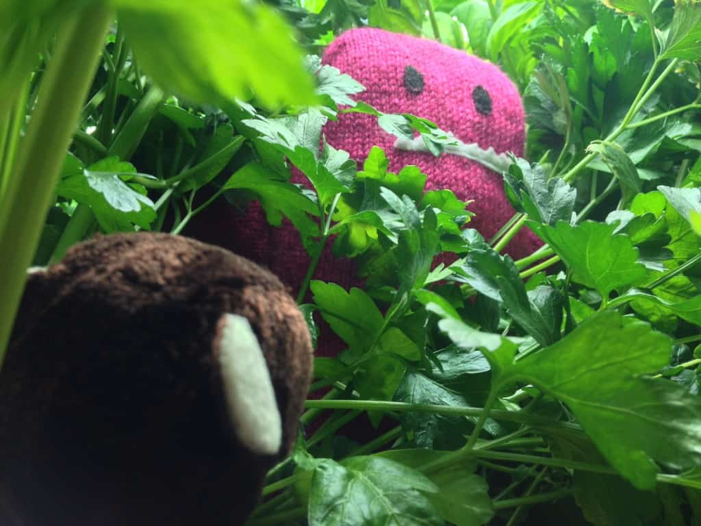 Searching in the jungle (aka our hydroponic system) for the Raspberry Monster.